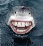 toothyshark(2)
