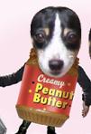 PeanutBuddy
